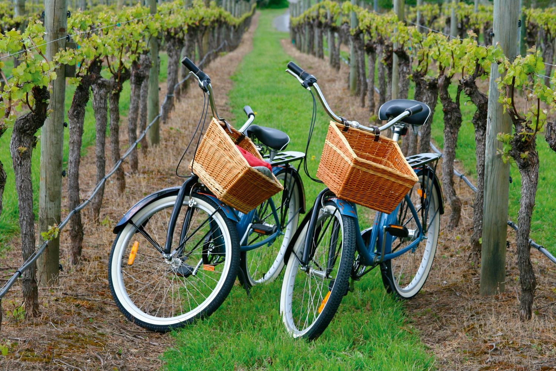 Calistoga Bike Wine Tour