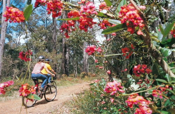 Munda Biddi Dwellingup Tourism Western Australia