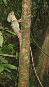 Rainforest-reptile